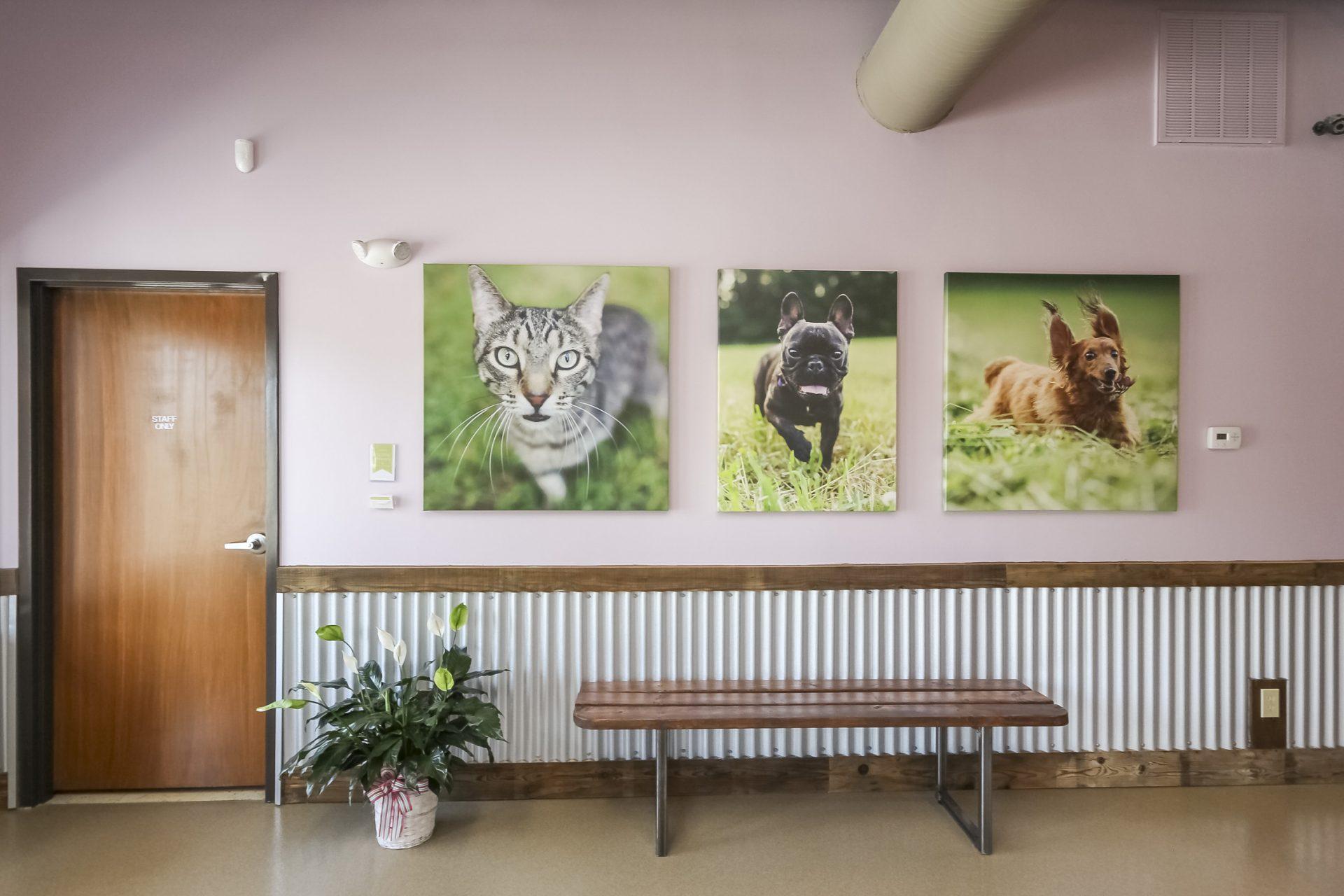 Brawley Animal Hospital 1
